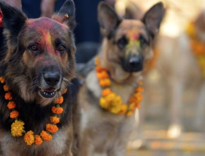 There Is A Festival In Nepal Every Year That Thanks Dogs For Being Our Friends