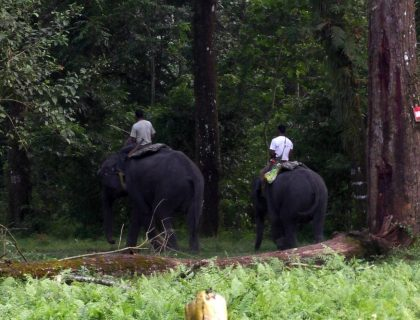 Forest Department Gears Up To Stop Poaching Of Wild Animals